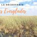 à la découverte des everglades en Floride