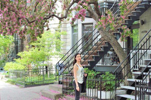 Un appartement typique à Montréal avec un arbre en fleurs