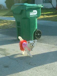 Un petit chien avec un tutu rose dans les rues de Miami