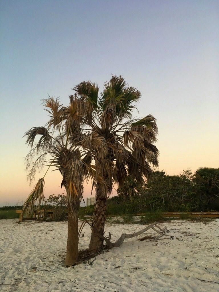 des palmiers au crépuscule avec un dégradé de couleurs dans le ciel sur la plage vue sur la ville de naples depuis la plage Delnor Wiggins Pass State Park en Floride
