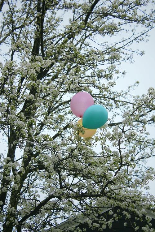 Ballon bleu rose et jaune dans arbres en fleurs blanches