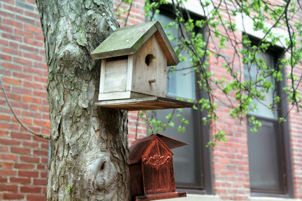 Une mangeoire à oiseaux dans un parc à boston