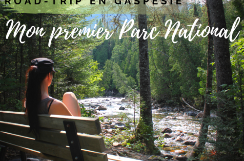Illustration de l'article road-trip en gaspésie, mon premier parc national