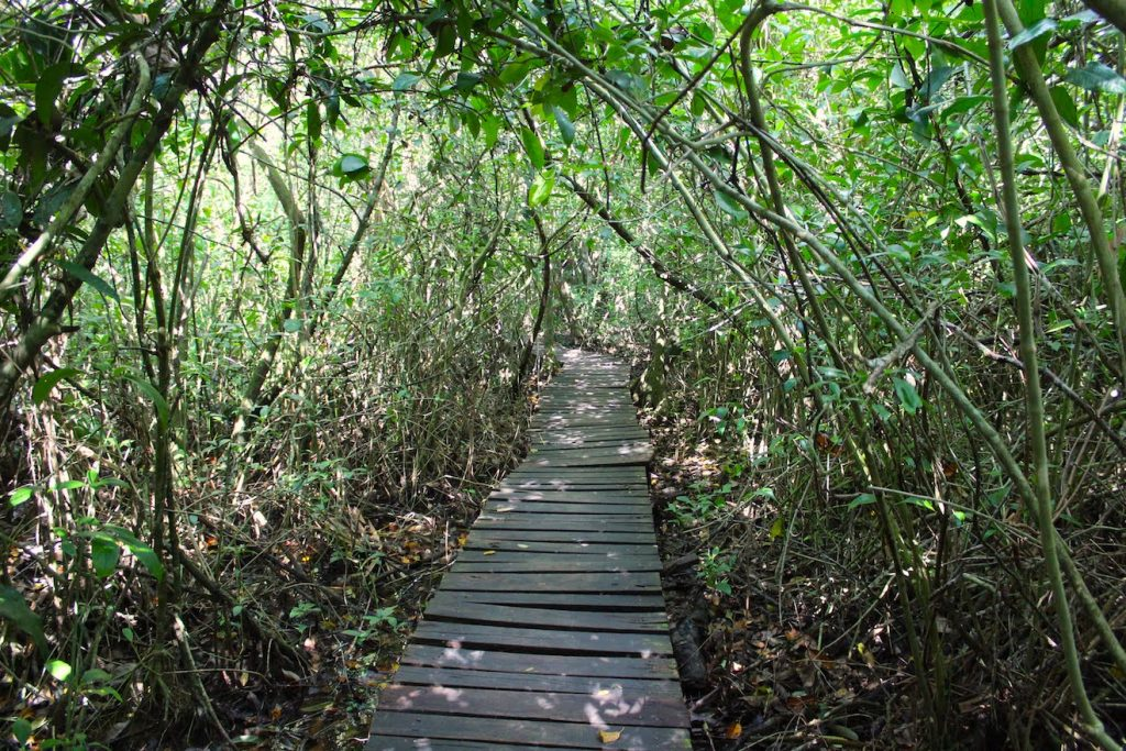 Chemin en bois qui traverse la jungle de la biopshère de sian ka'an