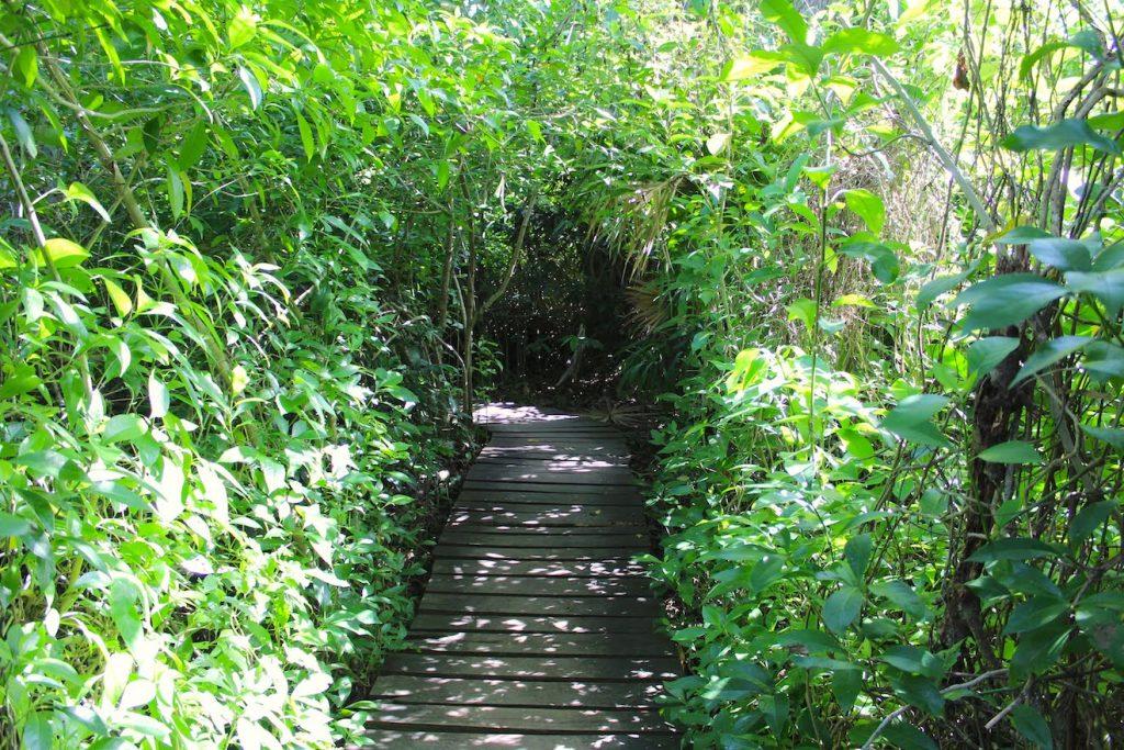 L'entrée dans la jungle de Sian Ka'an
