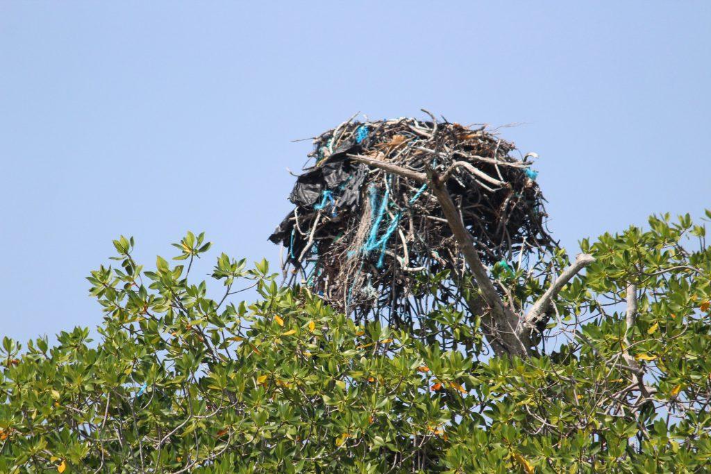 Un bel exemple de nid d'un aigle pêcheur ou balbuzard